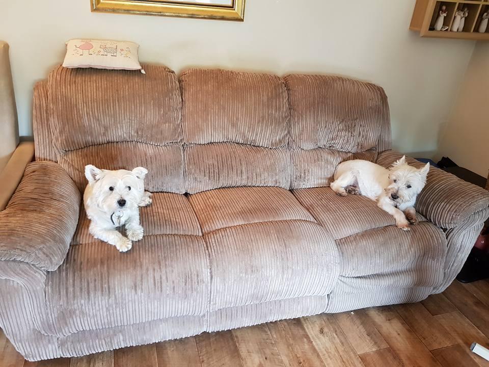 Pet sofa cleaned