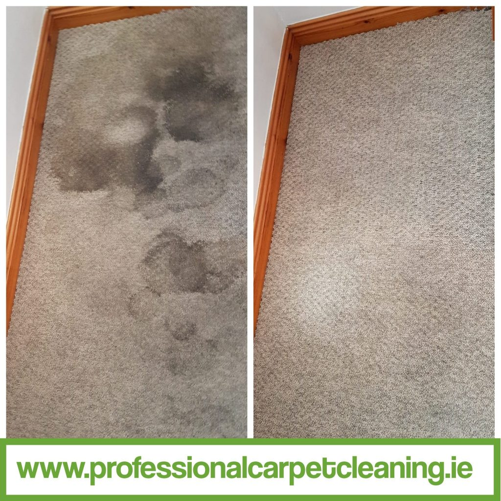urine damage carpet, cleaned by Happy Clean