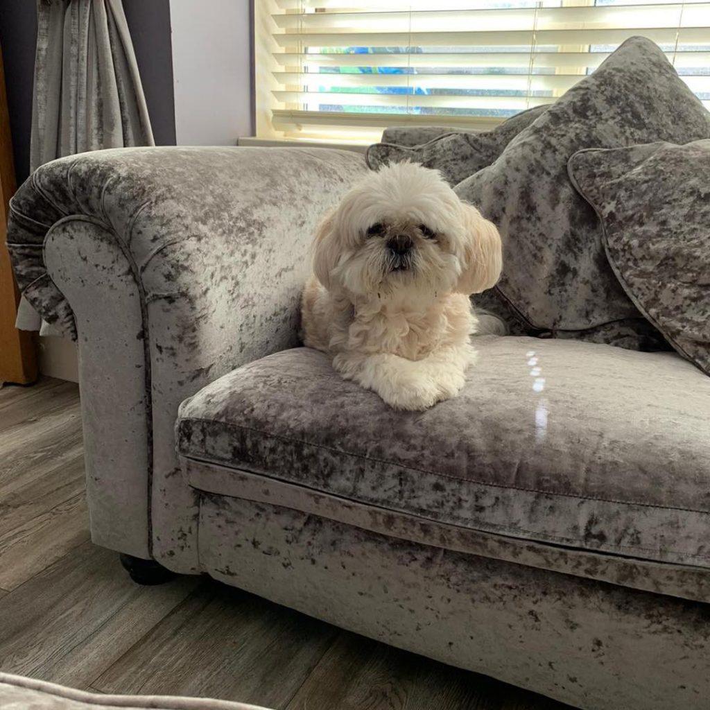 Velvet sofa cleaning
